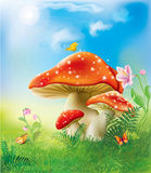 Red magic mushrooms Stock Images