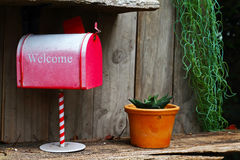 Red mail box and Cactus on wood background Stock Photos