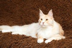 Animal cat at home Stock Photos