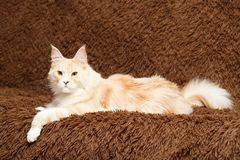 Animal cat at home Royalty Free Stock Photos