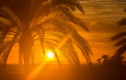 Red Majorca sunset with palm tree Royalty Free Stock Images