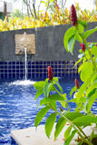 Red Malay Ginger at the pool Royalty Free Stock Photos