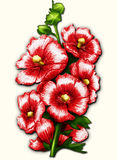 Red mallow on white. Big beautiful flowers red of mallow. Crayon drawing Stock Photo