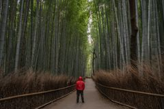 Red man in the bamboo forest stock images