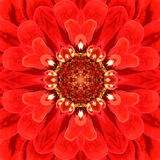 Red Mandala Concentric Flower Center Kaleidoscope Royalty Free Stock Image