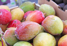 Red Mangos Mangoes Fruit Picked for Sale Stock Photos
