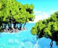 Red mangroves Stock Photo