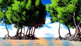 Red mangroves Stock Images