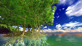 Red mangroves Royalty Free Stock Images