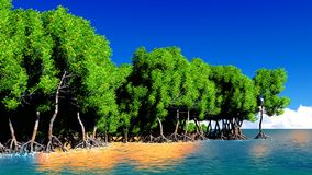 Red mangroves Royalty Free Stock Image