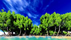 Red mangroves Stock Image