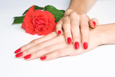 Red manicure and crimson rose Stock Photos