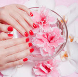 Red manicure with flowers Royalty Free Stock Photo