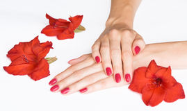 Red manicure and sword lilies Stock Photography