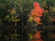 The Red Maple. A red maple beside a lake. Taken in Chester, South Carolina Royalty Free Stock Image