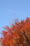 Red maple and blue sky. It was very beautiful against the backdrop of blue sky to turn red maple, floats contrail, I took a picture Stock Photos
