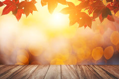 Red maple in Flare light. For autumn Background Stock Photo