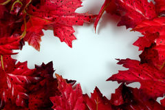 Red Maple Frame. Frame of Red Maple Leaves on a Bright White Writable Background stock photos