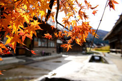 Red Maple leaf in Autum Stock Photography