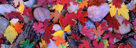 Red maple leaf background. Autumn leaf background sea stones. Stock Image