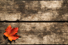 Red Maple Leaf Background. With copy space Stock Photo