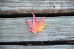 Red Maple Leaf on the Bench Royalty Free Stock Photography