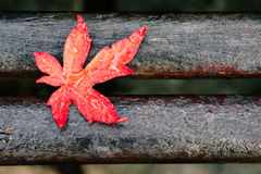 Red maple leaf with drops on a bench Royalty Free Stock Photography