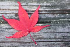 Red maple leaf fall on wood floor Royalty Free Stock Photography