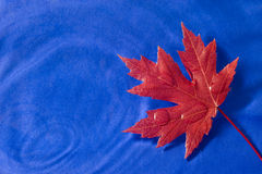 Red Maple Leaf Floating On Blue Royalty Free Stock Images