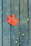 The red maple leaf on a green bench in autumn Royalty Free Stock Image