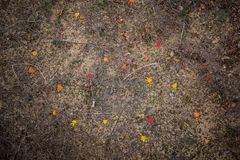 Red Maple leaf on the ground. Ground with colorful leafs and dry brunches Stock Photos