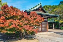 Red maple leaf of Hokoku shrine Hokoku-jinja in Osaka castle park. Red maple leaf of Hokoku shrine Hokoku-jinja in Osaka castle park, Osaka, Japan stock photo