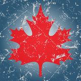 Red maple leaf and ice Stock Photography