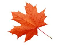Free Red Maple Leaf Isolated Royalty Free Stock Images - 162840719
