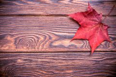 Red maple leaf. Lies on a brown wooden background stock photo