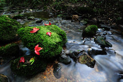 Red maple leaf and moss. At waterfall stock photo