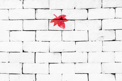 Red maple leaf painted on brick wall Stock Photo