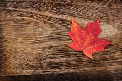 Red maple leaf on rustic brown wood. Single red maple leaf on a rustic brown wood background Royalty Free Stock Image