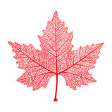 Red maple leaf . Symbol of Canada. Autumn. Vector illustration. Royalty Free Stock Photography