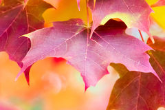 Red Maple Leaf, symbol of Canada Stock Photo