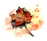 Red maple leaf - vector Stock Photo