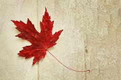 Red maple leaf. On a vintage wood background Stock Photo