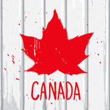 Red maple leaf on the wall. Red maple Canadian leaf on the white wood wall, vector graffiti illustration in grunge style stock illustration