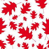 Red maple leaves as a seamless pattern Stock Photography