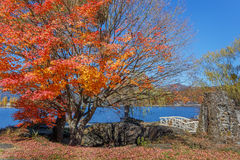 Red Maple leaves in autumn Royalty Free Stock Photography