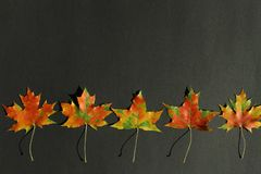 Red maple leaves on back background royalty free stock photos