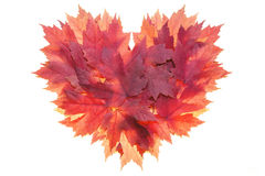 Red Maple Leaves Formed Heart Shape Stock Image