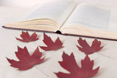Red maple leaves lie in front of an open book. The concept of starting education and returning to school Royalty Free Stock Photos