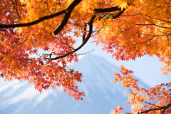 Red maple leaves mount Fuji Stock Photos