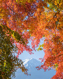 Red maple leaves mount Fuji Royalty Free Stock Photo